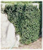 Impressive Climber and Creeper Wall Plants Ideas 69