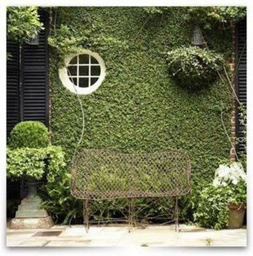 Impressive Climber and Creeper Wall Plants Ideas 73