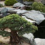 Peacefully Japanese Zen Garden Gallery Inspirations 49