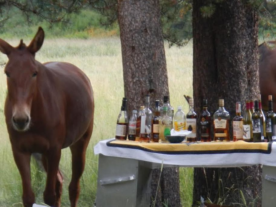 Horse Standing with Alcohol