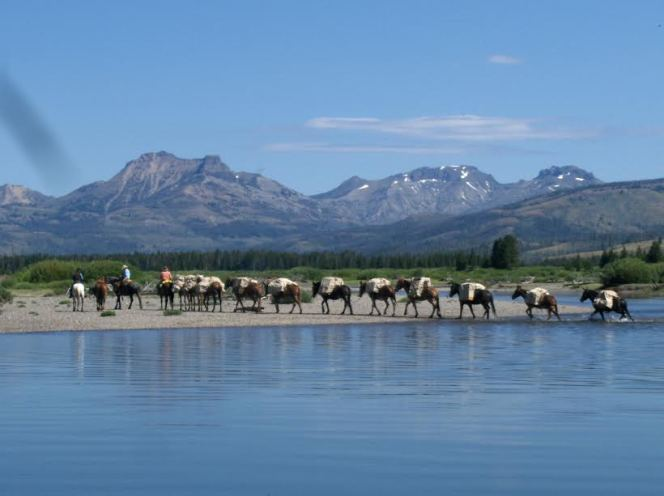 Horses and Mules Leaving the Water