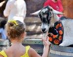Petting Zoo at Disneyland