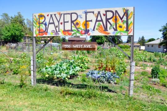 Bayer Farm
