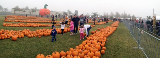 The Great Park Pumpkin Patch