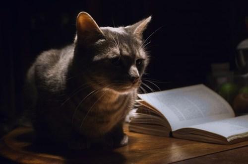 pisici vorbitoare