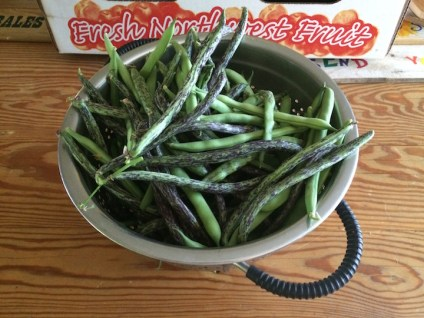 First harvest of pole beans.