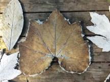 Squash leaf mold