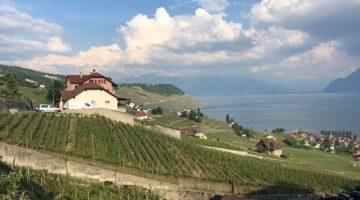 Tour durch das Lavaux entlang des Genfer Sees