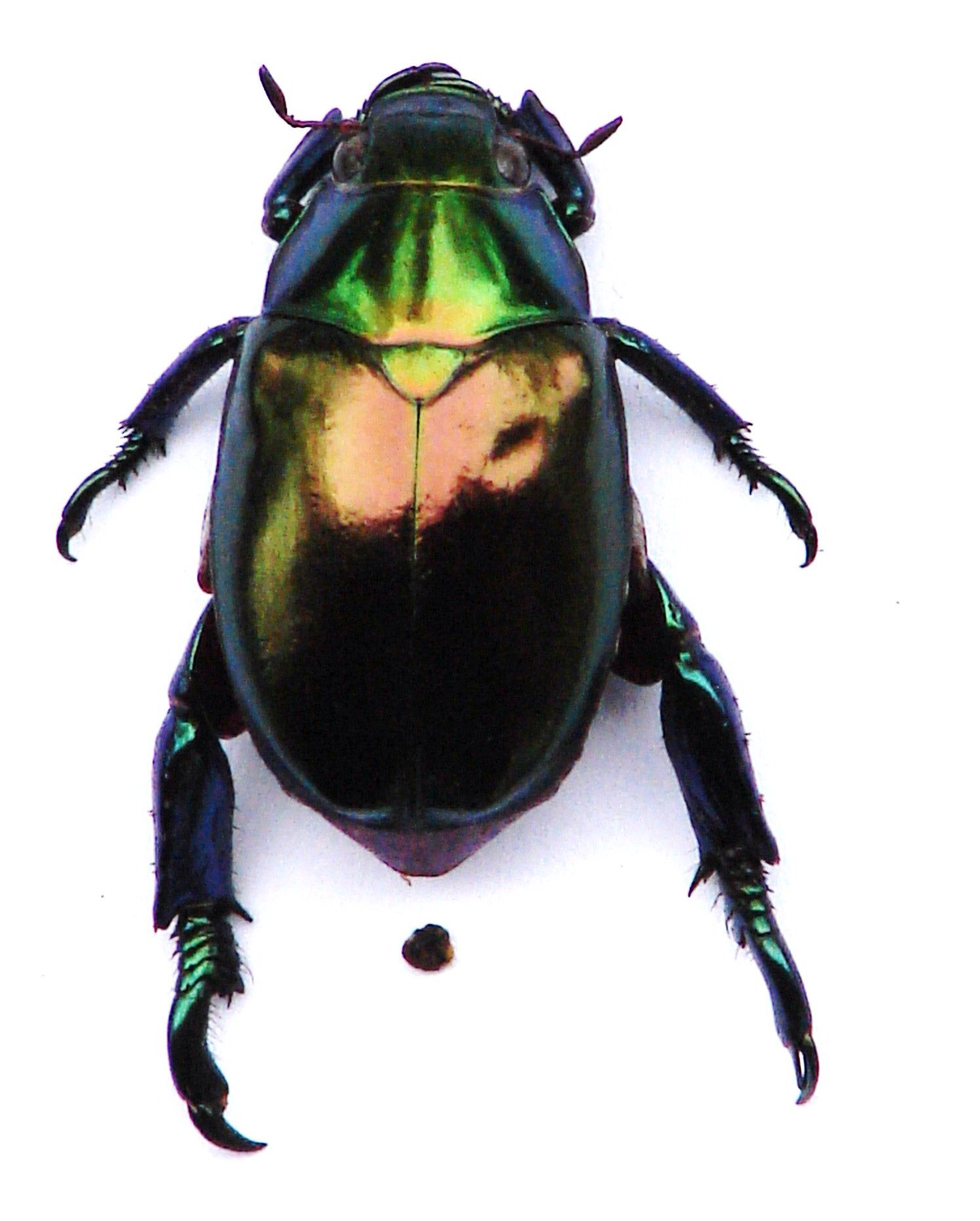 Le Meilleur The Scarab Beetle That Told Me To Start Digging For My Ce Mois Ci