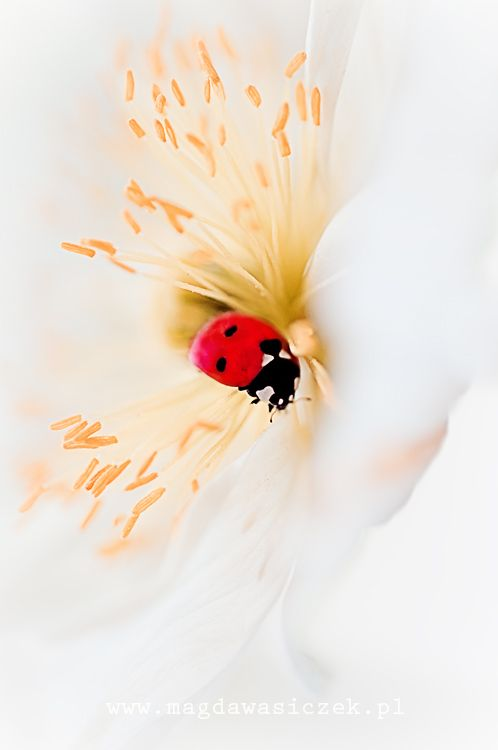Le Meilleur By Magda Wasiczek The Lady In Red Coccinelle Ce Mois Ci