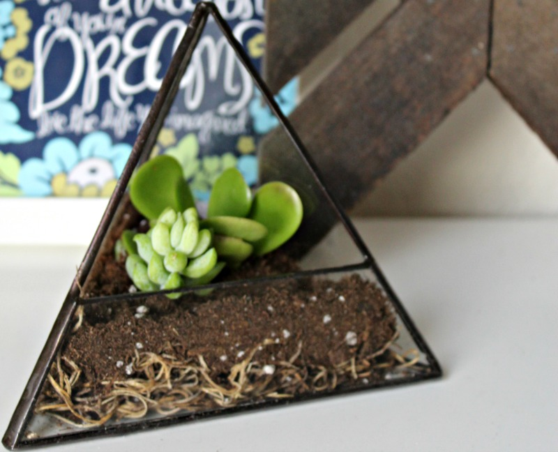 Add some greenery to your home with a terrarium