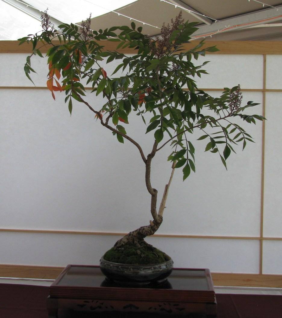 Iker Bonsai Pots Colorado Rocky Mountain Bonsai Suiseki