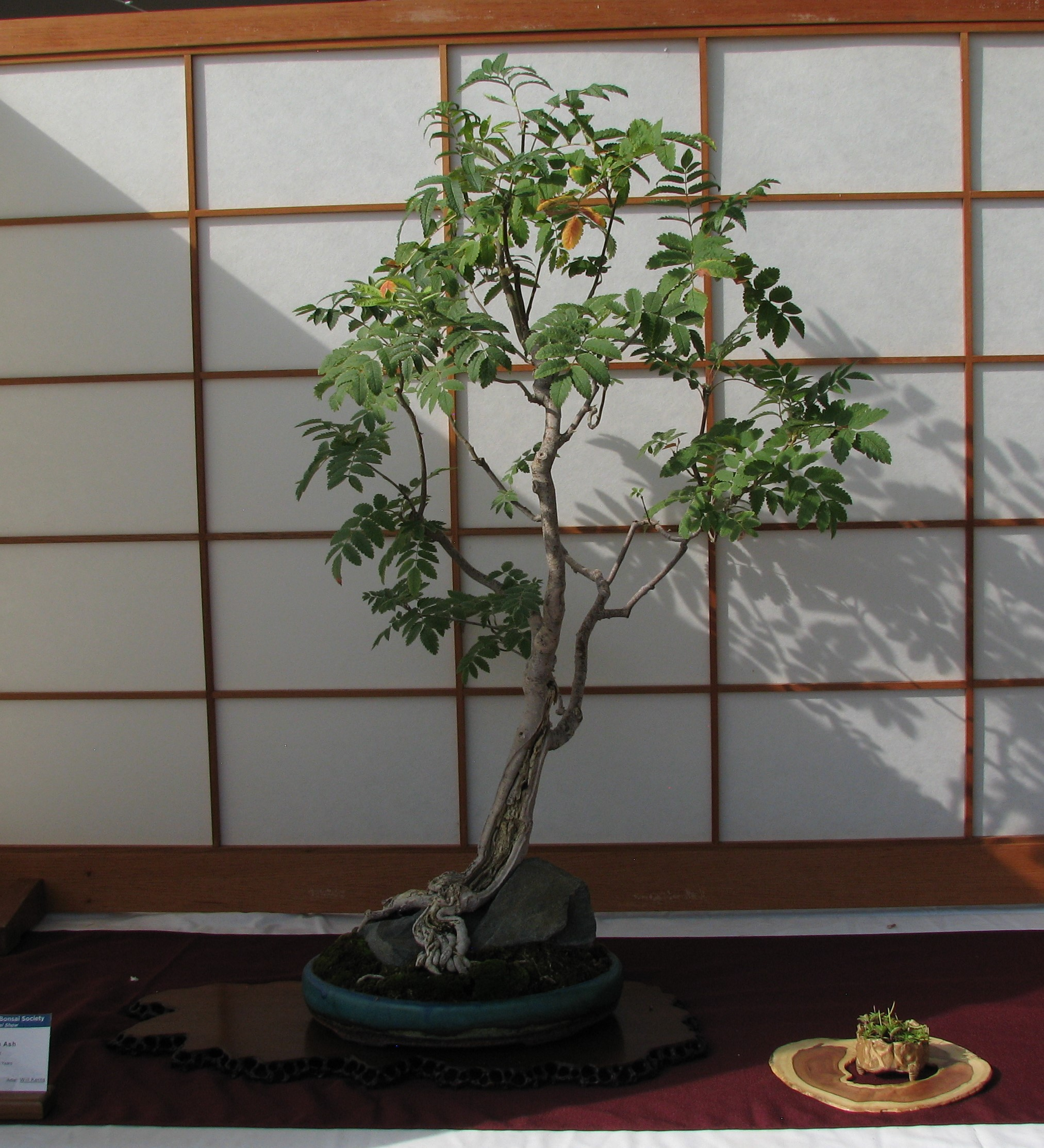 Literati Or Bunjin Colorado Rocky Mountain Bonsai Suiseki