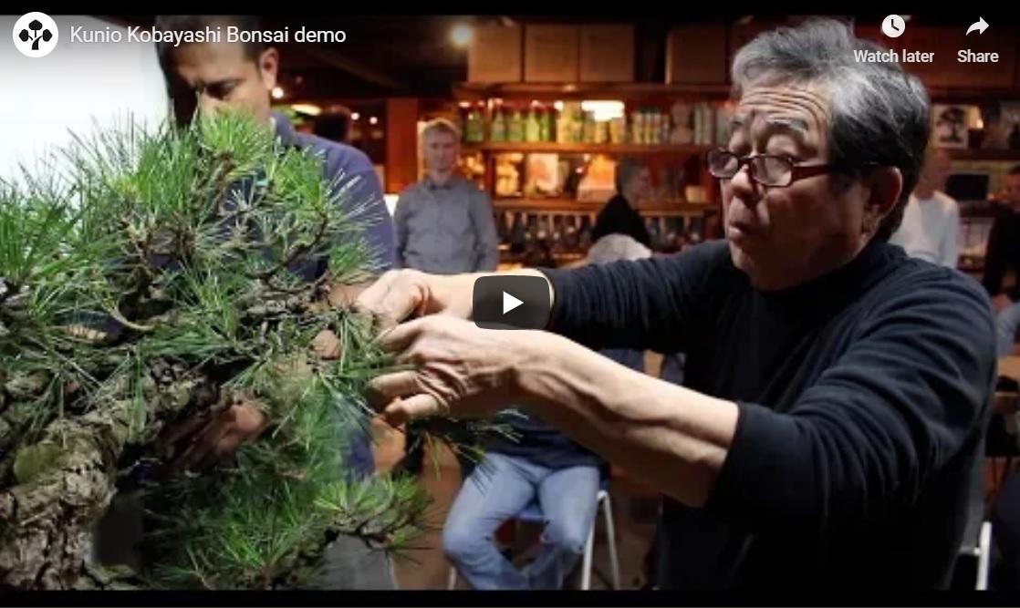 Outstanding Colorado Bonsai Kunio Kobayashi Bonsai Demo Pine Colorado Wiring Cloud Oideiuggs Outletorg