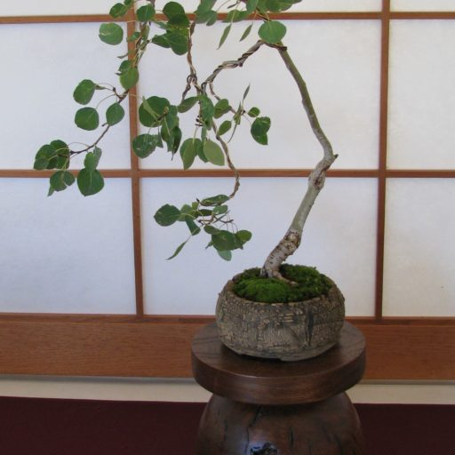 Bonsai Wire Vendors Colorado Rocky Mountain Bonsai Suiseki