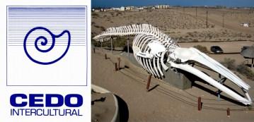 cedo CEDO seeks Field Education Resident