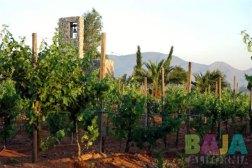 wine-country04 Wine Tasting Feb 17 & 18 @ Don Julio's