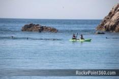 bird-island-30 S P R I N G!  Rocky Point Weekend Rundown!