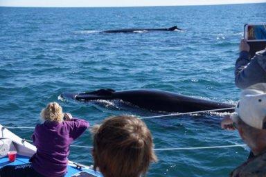 Tony-whales2014