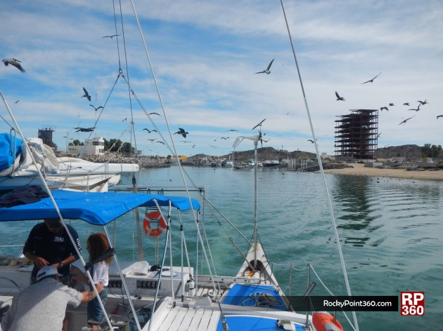 whale-trip-feb2014-1-630x472 Take a breath - Rocky Point Weekend Rundown!