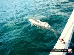 whale-trip-feb2014-3 World class whale watching in Puerto Peñasco