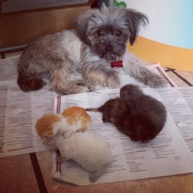 IMG_20150818_140842-630x630 Ocurrió en el día del veterinario, una historia de perros y gatos.
