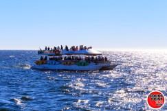 ecofun whalewatching 001