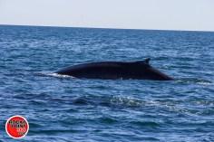 whales-feb21-2017-delmar (15)
