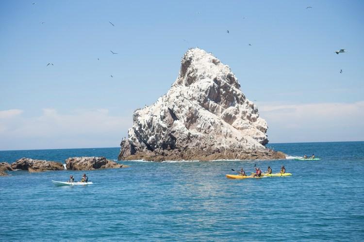 Bird-island-ecofun-tours-1200x800 ¡...y próspero año nuevo! Rocky Point Weekend Rundown