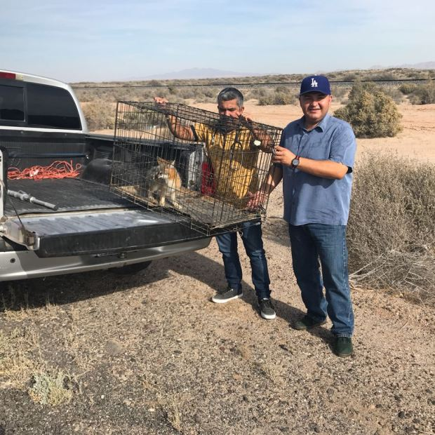fox-december4 Zorro retirado de zona turística liberado en el desierto