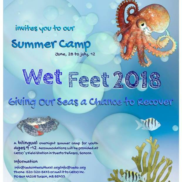 cedo-wet-feet-camp-2018 ¡Campamentos de verano 2018 en Puerto Peñasco!
