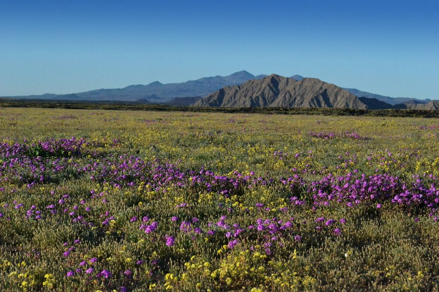 pinacate-flora-BBC BBC London to share global documentary on Pinacate