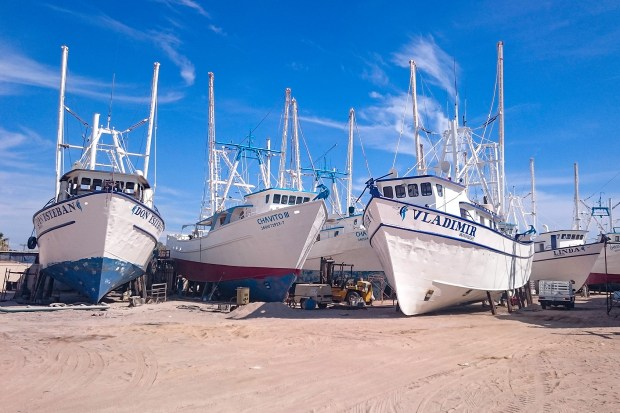 shrimp-boats-rocky-point Shrimp boats readying for 2019-2020 season