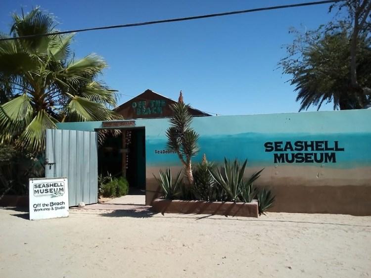 seashell-museum SeaShell Museum reopens Oct. 4th!