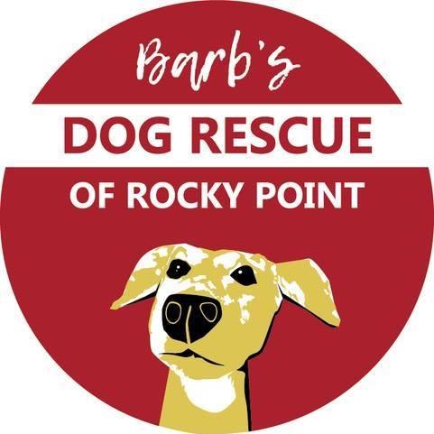 Barbs-Dog-Rescue-20 Batter up! Rocky Point Weekend Rundown