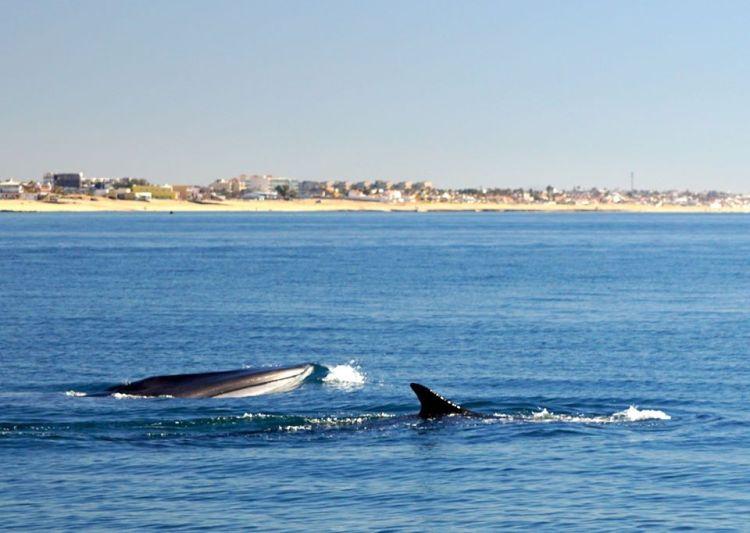 jan-fin-whale-tony-ballesteros Bowl-ing  Rocky Point Weekend Rundown!