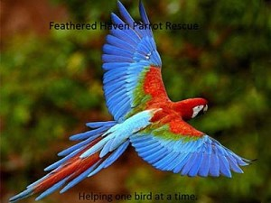 Feathered Haven Parrot Rescue