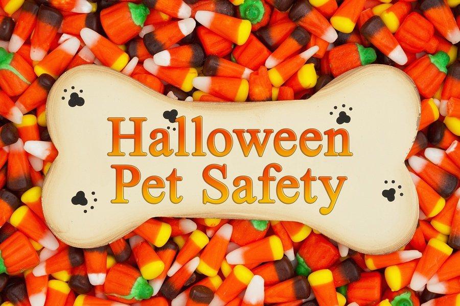 Halloween dog Safety
