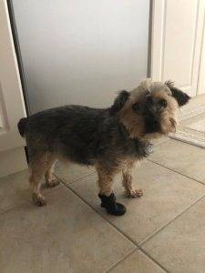 Dog Boots Rocky