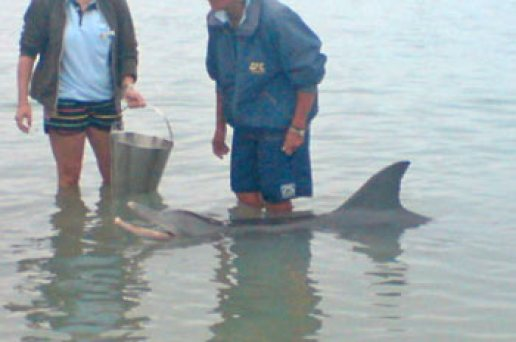 Feeding Dolphings, Monkey Mia, Western Australia