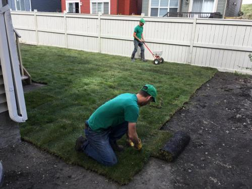 Sod | Lawn fertilization