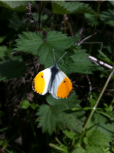 butterfly on the glamping farm