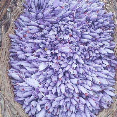 Roco Saffron Customers - Wholesale Crocus Sativus Bulbs