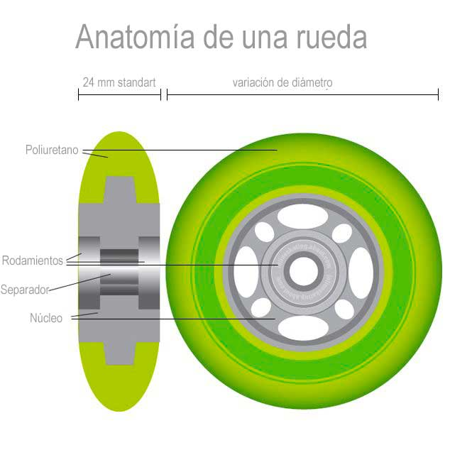esquema rueda patin línea