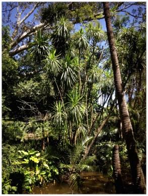 Botanic Gardens Grahamstown