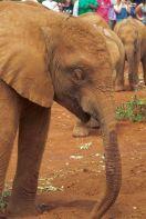 David Sheldrick Wildlife Project (12)