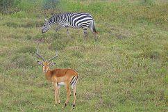 Lake Nakuru National Park (128)