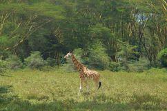 Lake Nakuru National Park (141)