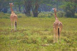 Lake Nakuru National Park (144)