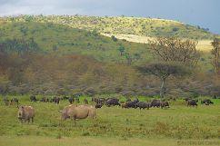 Lake Nakuru National Park (151)
